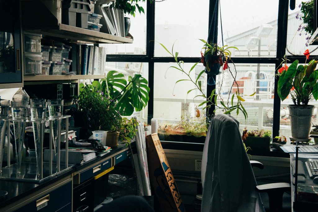 Consider adding plants or fruit to your office to improve your work space